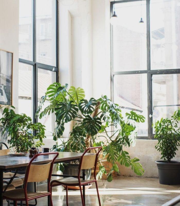 20 best office plants