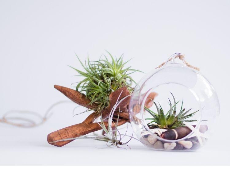 20 low maintenance office plants