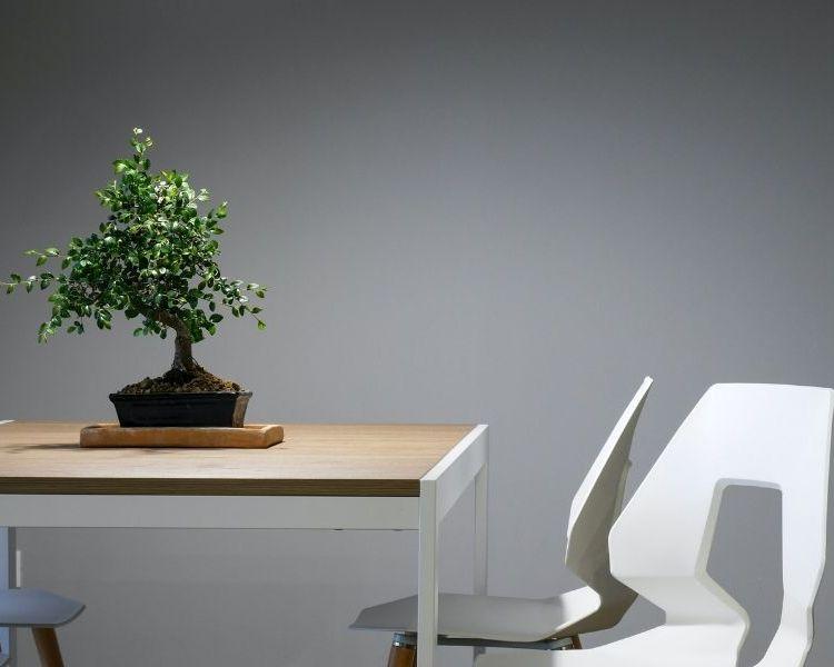 bonsai best office plant