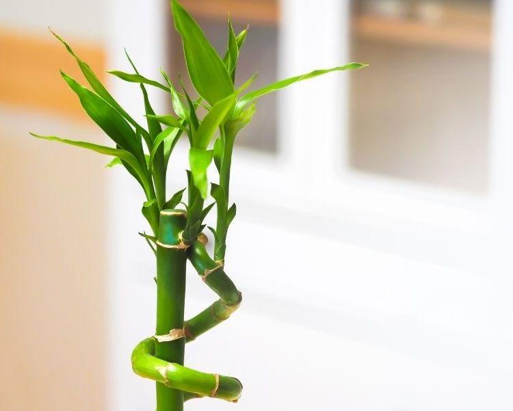 modern bamboo office